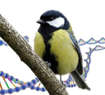 New publication: Heterozygosity at a single locus explains a large proportion of fitness variation in great tits