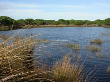 Impacts of groundwater abstraction on temporary ponds in Doñana