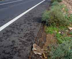 Wildlife-vehicle collisions in Lanzarote Biosphere Reserve