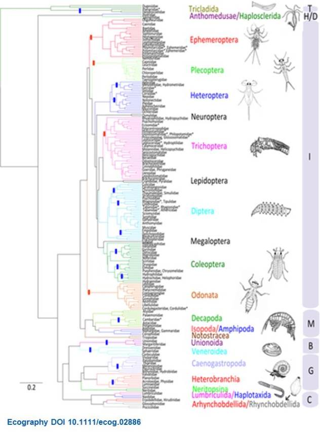 Trait evolution across the tree?of?life of freshwater macroinvertebrates