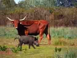 Interactions between domestic and wild ungulates