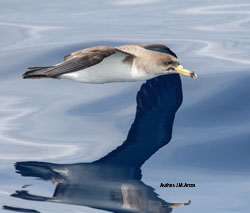 Are fisheries affecting seabird juvenile survival during the first days at sea?