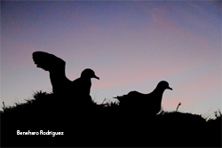 The six most important threats for petrels and shearwaters