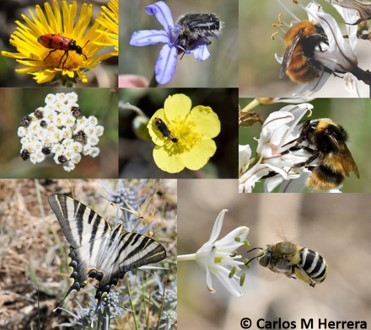 Predictors of pollinator service