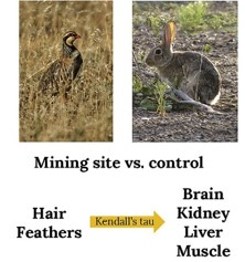 Hair and feathers as monitoring tools of mine pollution