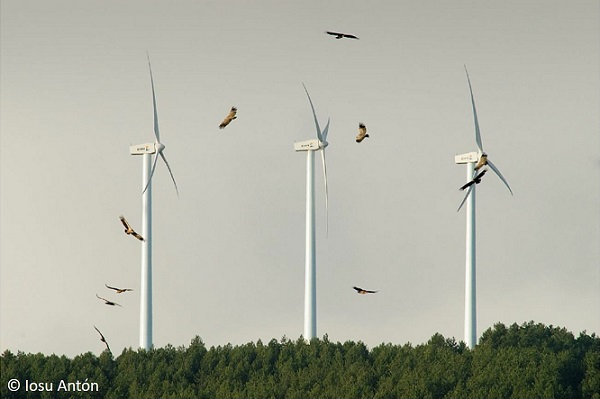 Spanish scientists warn: Urgent need for planning of renewable energies to safeguard biodiversity