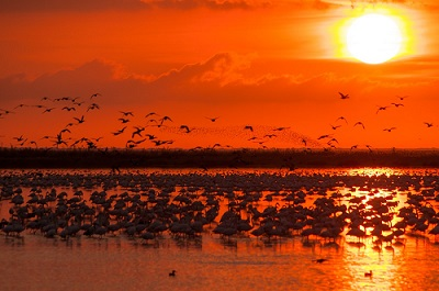 More than have a million birds registered in Doñana during winter