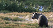 Environmental and anthropogenic drivers of brown bear damage
